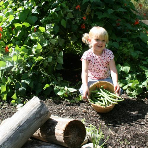Girl picks green beans in the First Love Farm program