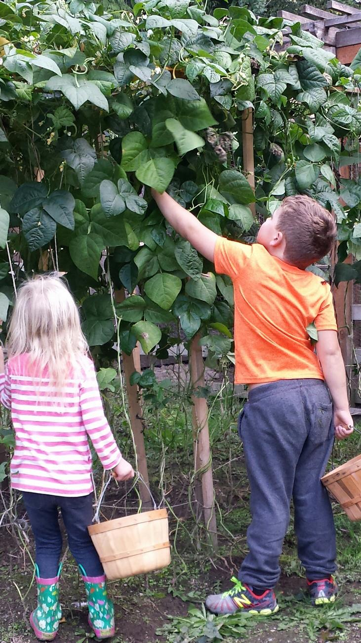 Children pick green beans for local food banks