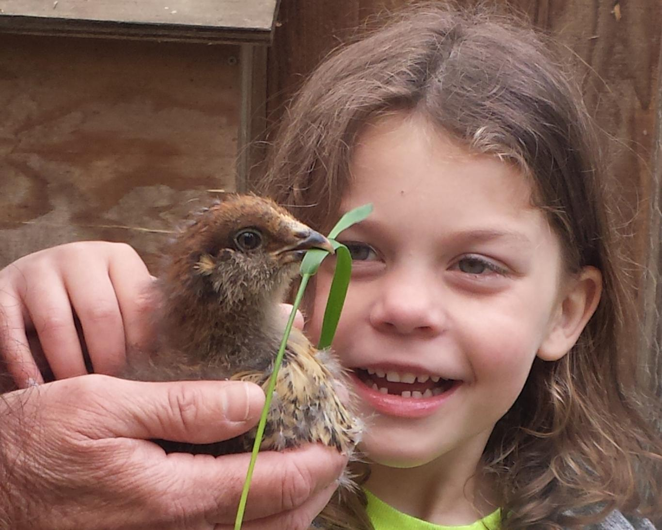 Girl meets baby chick on the farm