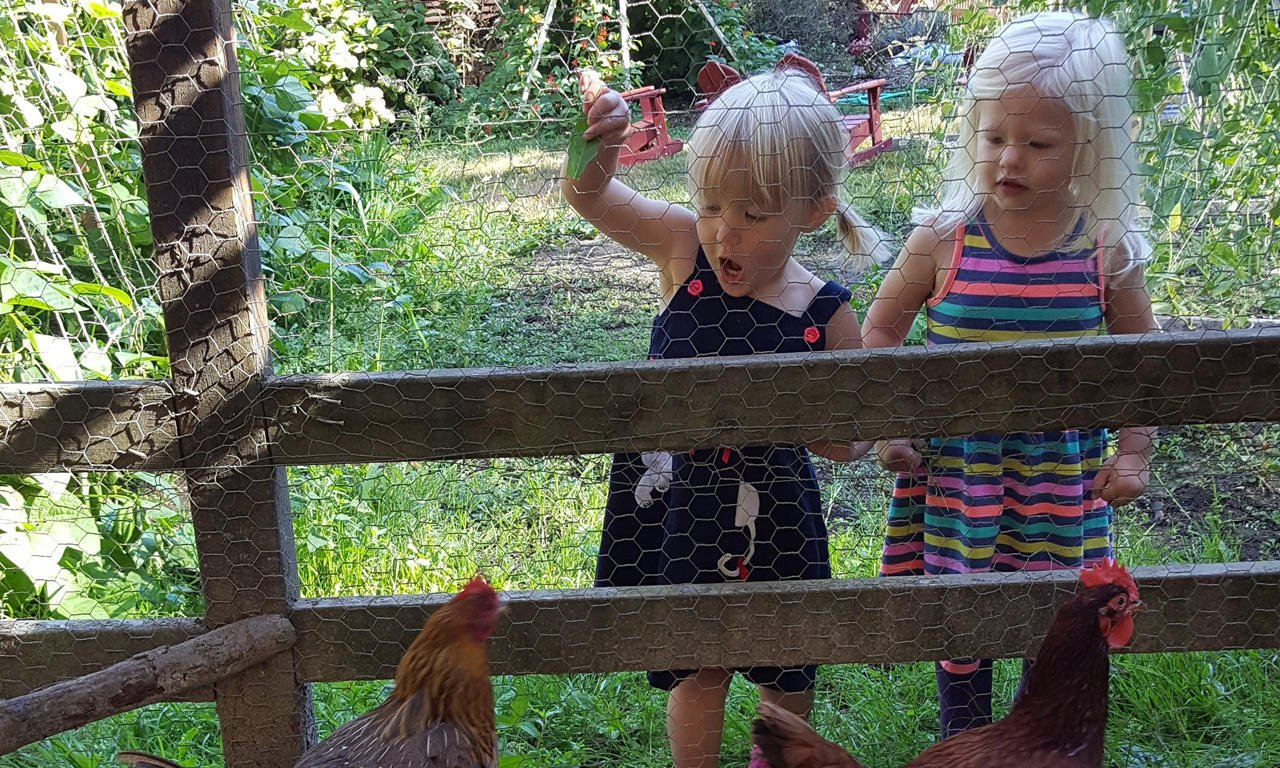 Chickens are part of farm life at Village Learning Child Care