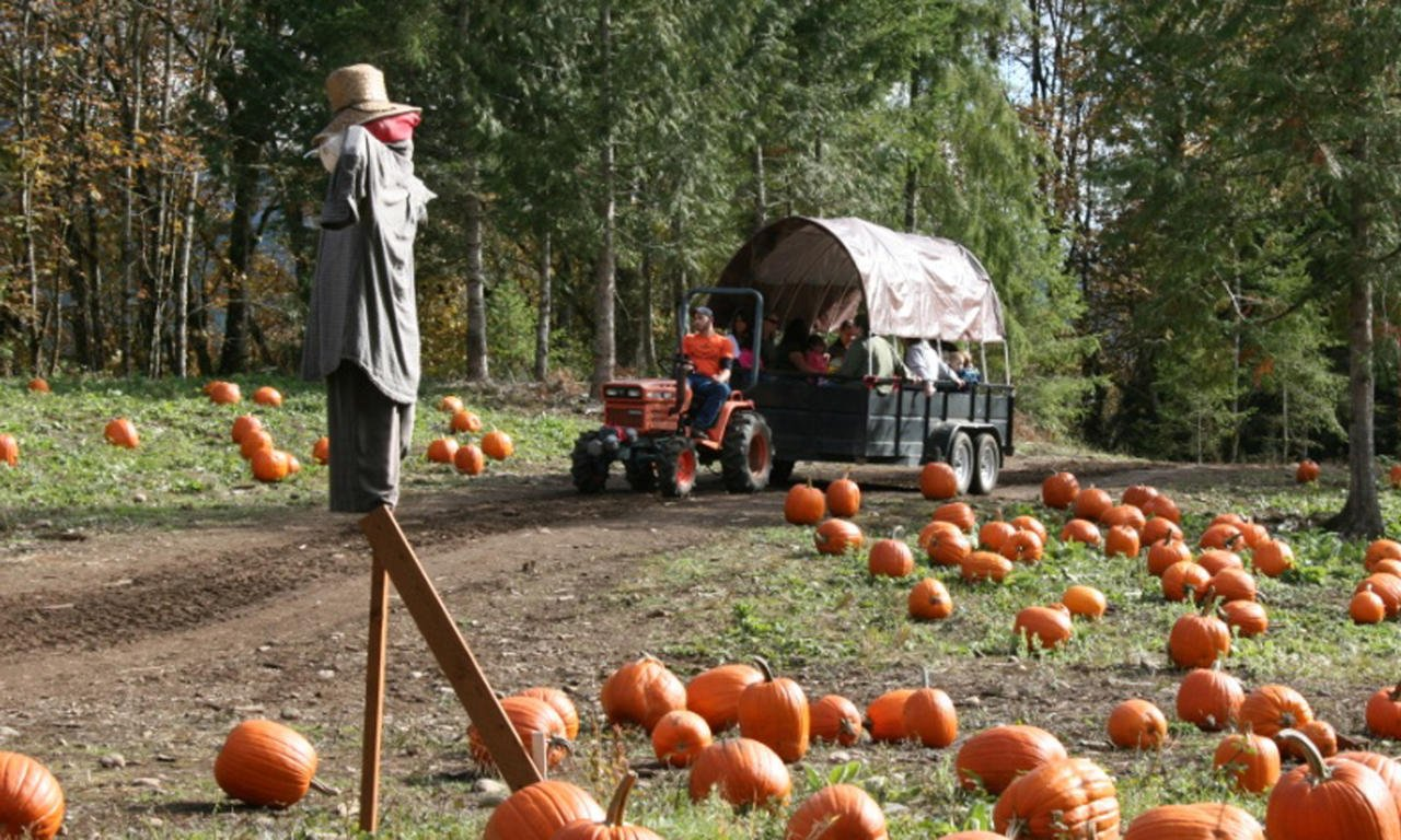 Village Learning children take a field trip to the pumpkin patch