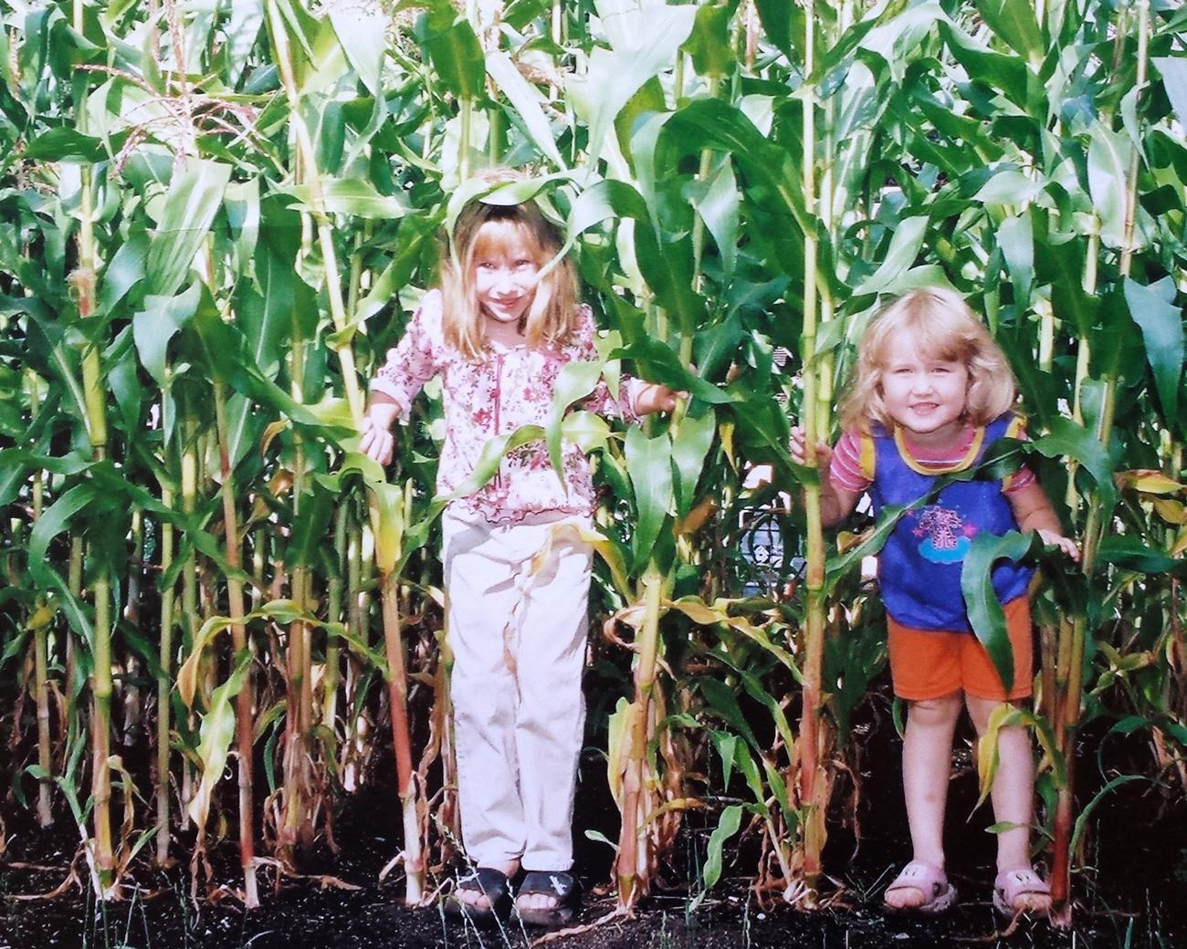 Children peek through corn stalks in our summer garden